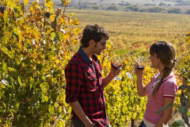 L'offerta agroalimentare e vitivinicola siciliana vanta un numero consistente di aziende, collocando la regione ai primi posti delle classifiche nazionali...