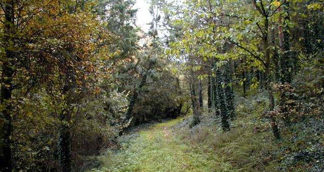 Dentro il bosco di Monte Altesina