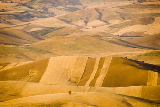 Le campagne dorate di Villalba