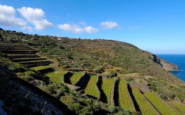 I vini vulcanici da viticultura eroica sul Palcoscenico Sicilia al Vinitaly