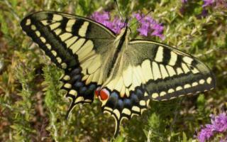 Importanti novità per la Casa delle Farfalle di Modica