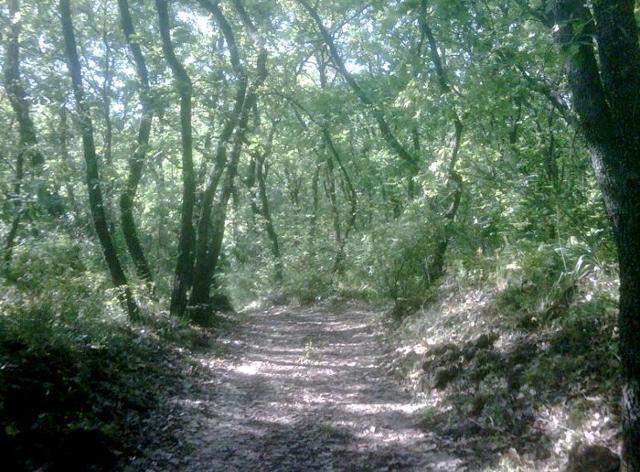 Sentiero che attraversa il bosco di Monte Serra
