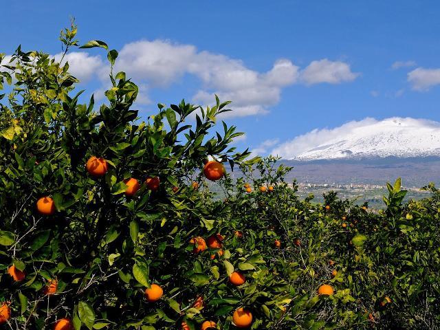 Negli USA la spremuta di Arance Rosse siciliane si chiama Mongibello