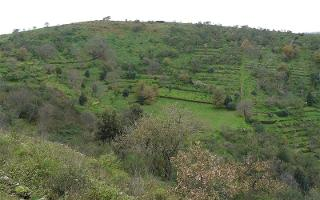 Il Parco Monte Serra, dove vivono le farfalle