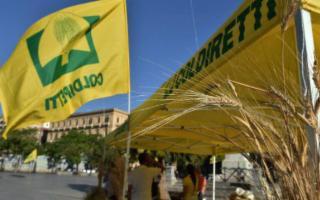 La Sicilia, patria dei cereali biologici