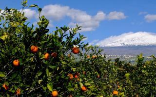 Catania ospita il convegno nazionale della Confederazione italiana agricoltori