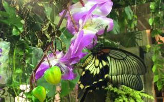 Per la Casa delle Farfalle di Modica nuovo logo e nuova avventura