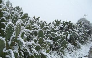 In Sicilia il freddo arriva adesso... Avete mai pensato di installare un Termostato Intelligente?