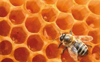 Qui si produceva il miglior miele dell'antichità...