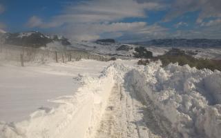 L'agricoltura siciliana distrutta dal gelo