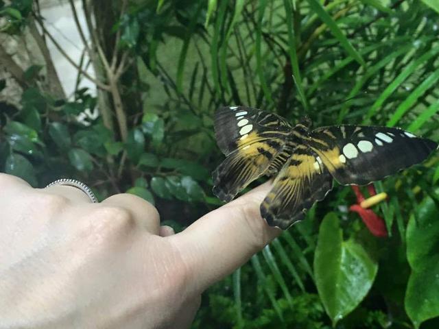 A Modica arrivano le ''Notti delle Farfalle''