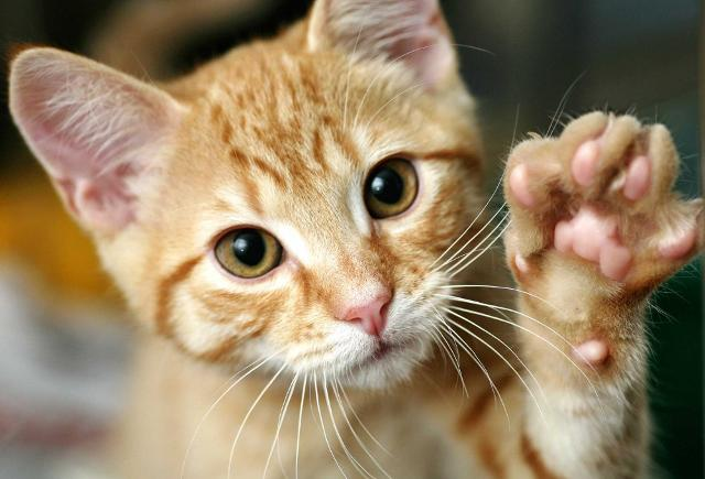 Oggi è il World Cat Day