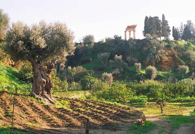 Giardino della Kolymbethra - Valle dei Templi
