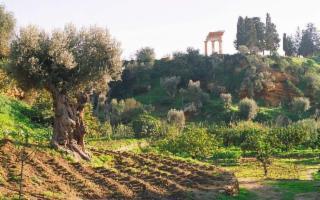 Il Consiglio d'Europa premia il Parco Archeologico della Valle dei Templi