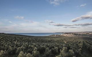 150 ettari di oliveto sul mare