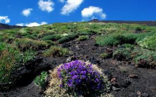 Etna: trekking tra tunnel lavici e lave a corda