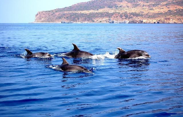 I pescatori delle Eolie ''cacceranno'' i delfini con i sonar
