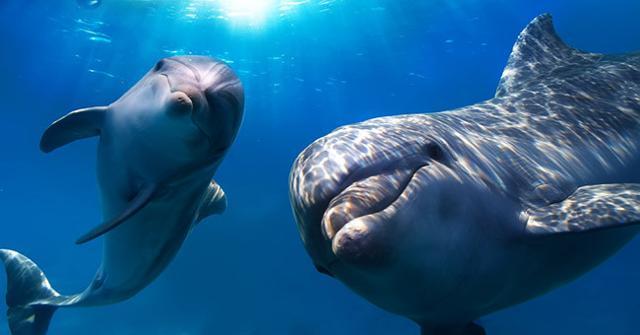 Dove ''comandano'' i delfini