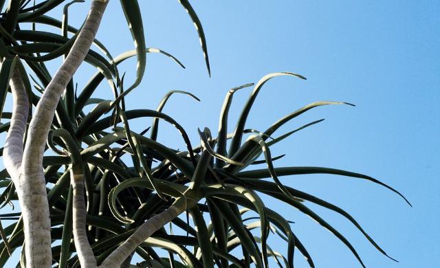 In Sicilia la I edizione del Garden Festival del Mediterraneo