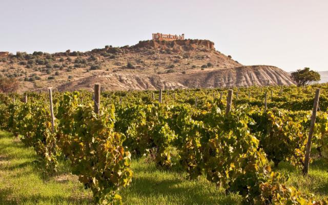 Nasce la Strada del vino della Valle dei Templi