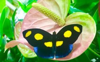 Una farfalla simbolo del rispetto ambientale