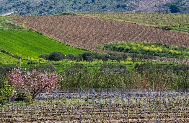 Strada del vino Terre Sicane