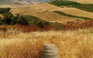 Nel cuore rurale della Sicilia