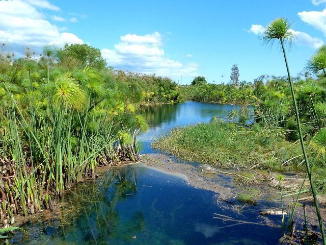 Un tratto del fiume Ciane - ph Marchal