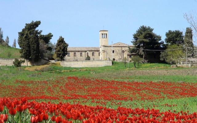 Blufi, il paese dell'olio e dei tulipani rossi