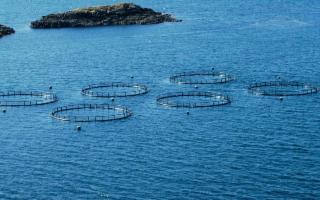 A Catania per parlare di Acquacoltura: Qualità, Sostenibilità e Sicurezza