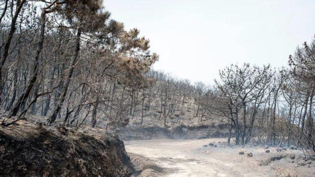 Pantelleria subito dopo l'incendio del 2016
