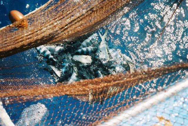 """Il pescaturismo è tra gli esempi più completi di quello che oggi viene chiamato """"turismo esperienziale"""""""