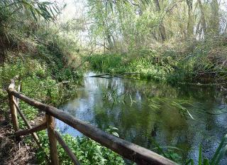 La Riserva Naturale di Fiumefreddo