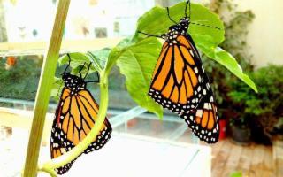 La Casa delle Farfalle di Modica
