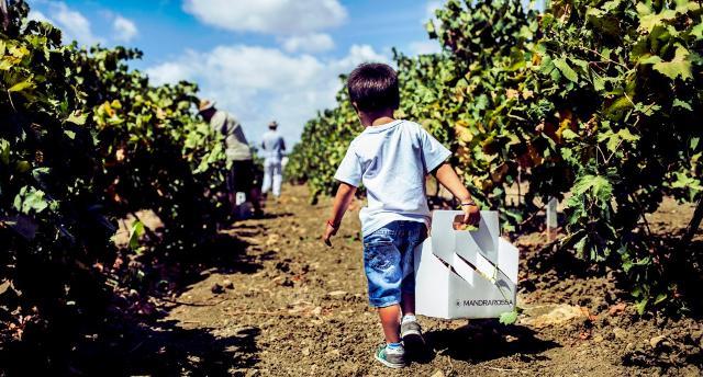 Il Mandrarossa Vineyard Tour, un evento anche a misura di bambino!
