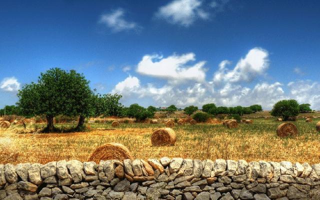 I carrubi contraddistinguono i paesaggi del ragusano - ph. Giorgio Leggio