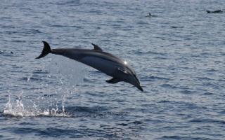 La pesca industriale e lo spiaggiamento dei cetacei in Sicilia