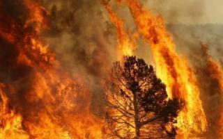 Emergenza incendi, la Cia Sicilia contro il Governo regionale
