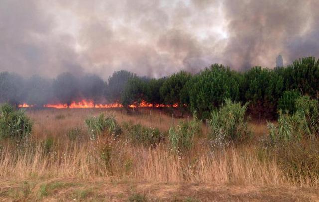 Incendi per 10 euro l'ora...
