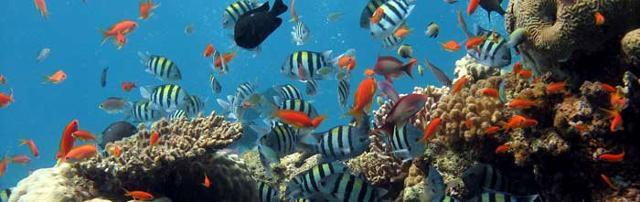 La variopinta popolazione del mare di Isola Bella