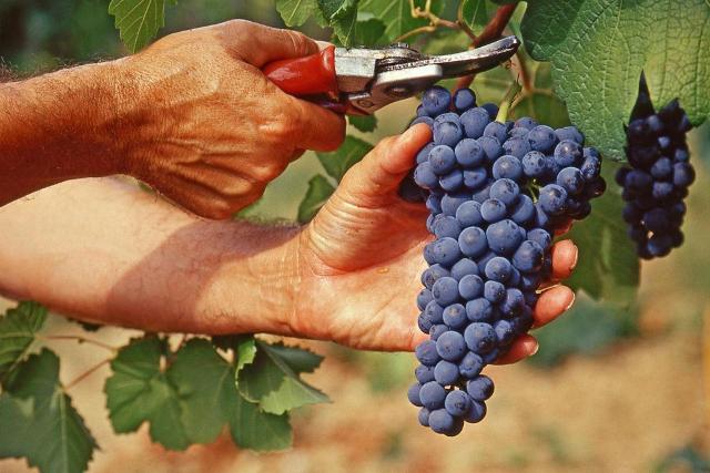I vignaioli della Fivi sbarcano a Taormina Gourmet