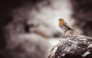Il guardiano del silenzio, di Filippo Barbaria