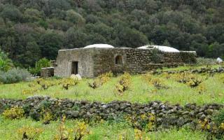 Omaggio alla viticoltura eroica