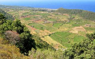 Omaggio alla ''viticoltura eroica''