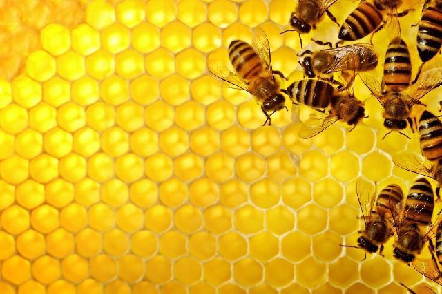 Le api e il loro miele