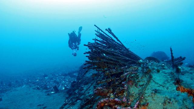 È un fondale fantastico quello interno alla falce di Messina