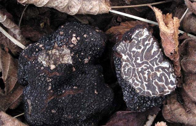 il-tartufo-tra-i-sapori-d-autunno