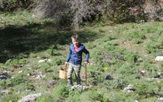 A nove anni svela i segreti dei funghi dei Nebrodi