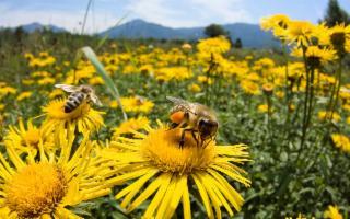 Un protocollo d'intesa per salvaguardare la vita delle api