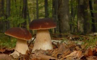 I luoghi ''segreti'' dei funghi in Sicilia